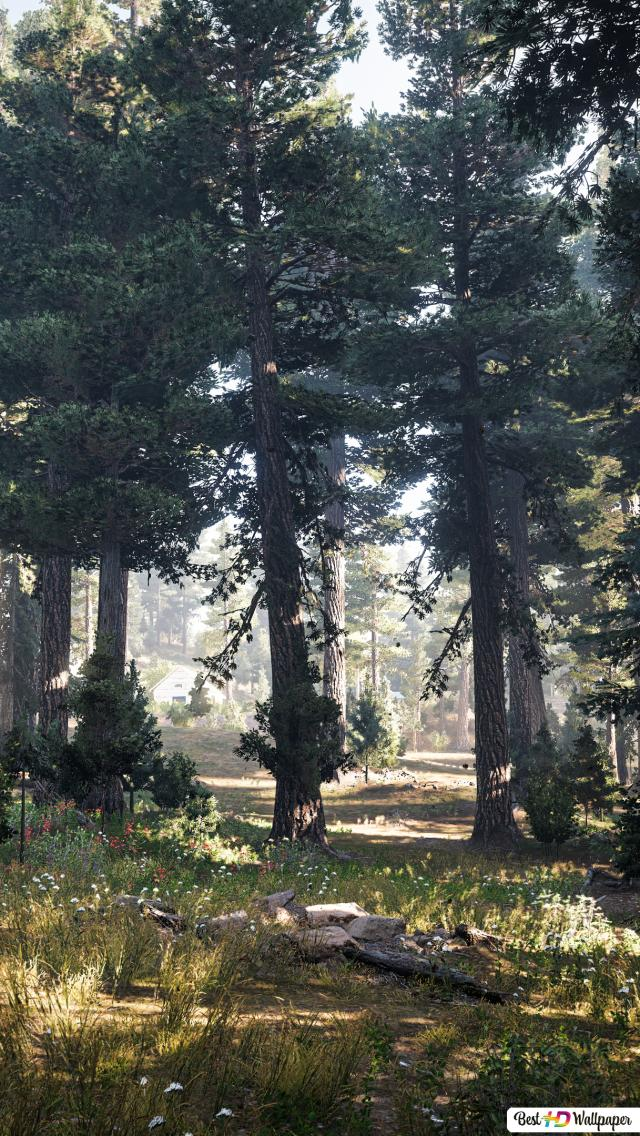 47 Far Cry 5 Pine Trees Hd Wallpaper Download