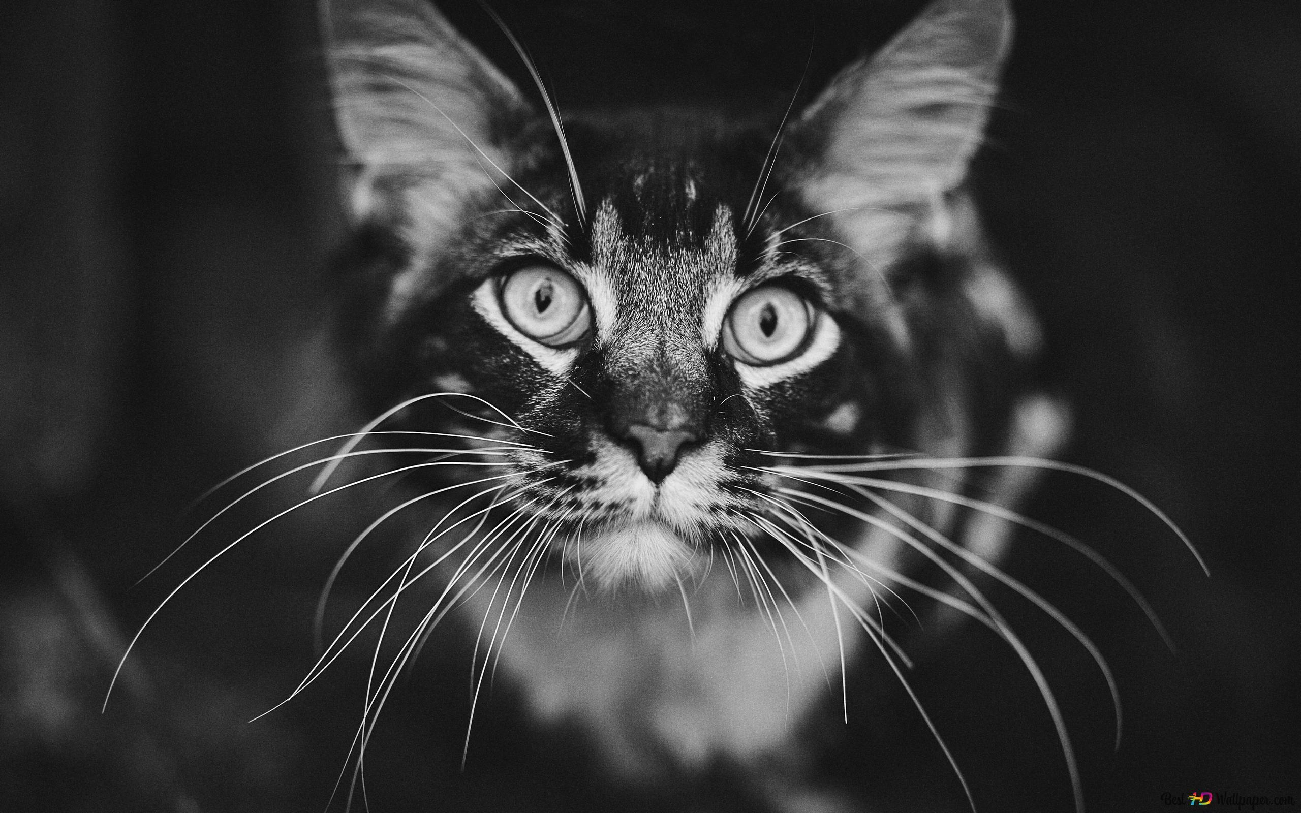 A 3d Cat Hd Wallpaper Download