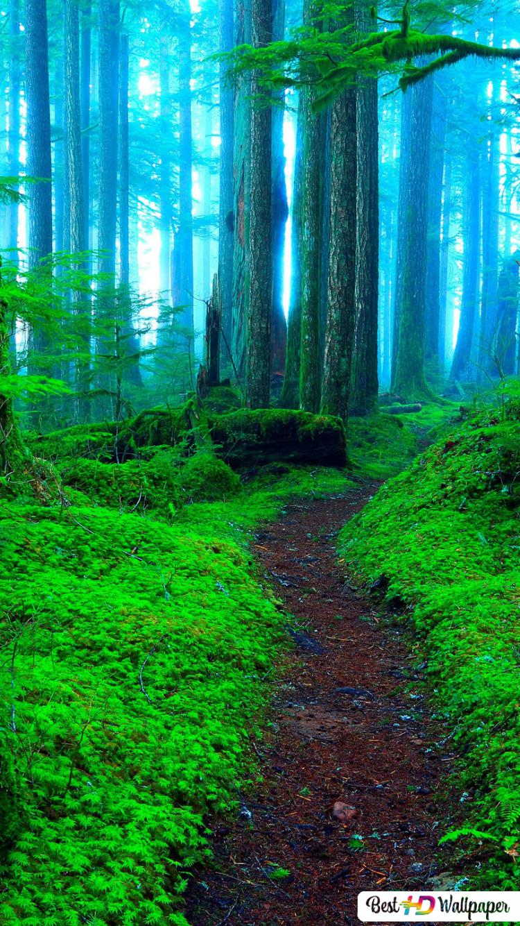 Abandoned walkway in the green forest ...