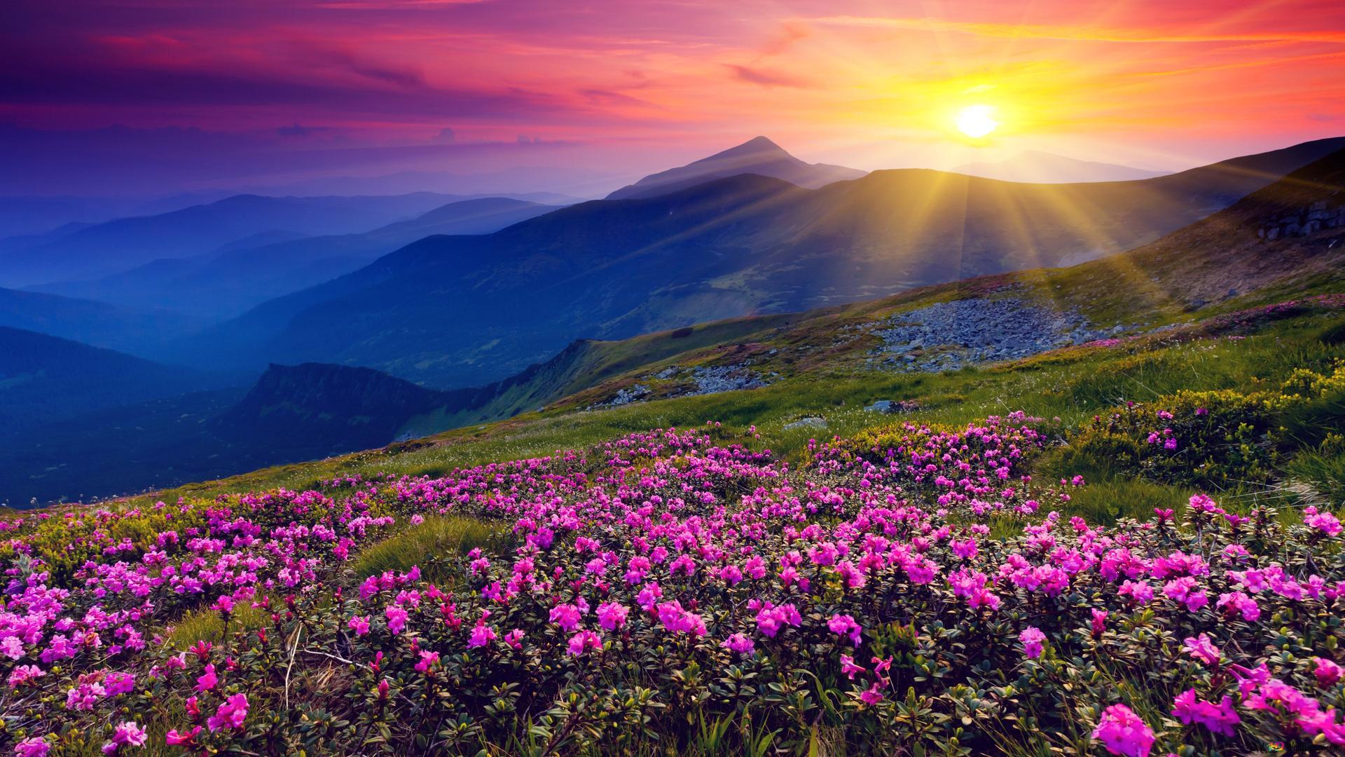 Alba e fiori di primavera download di sfondi hd for Immagini desktop primavera