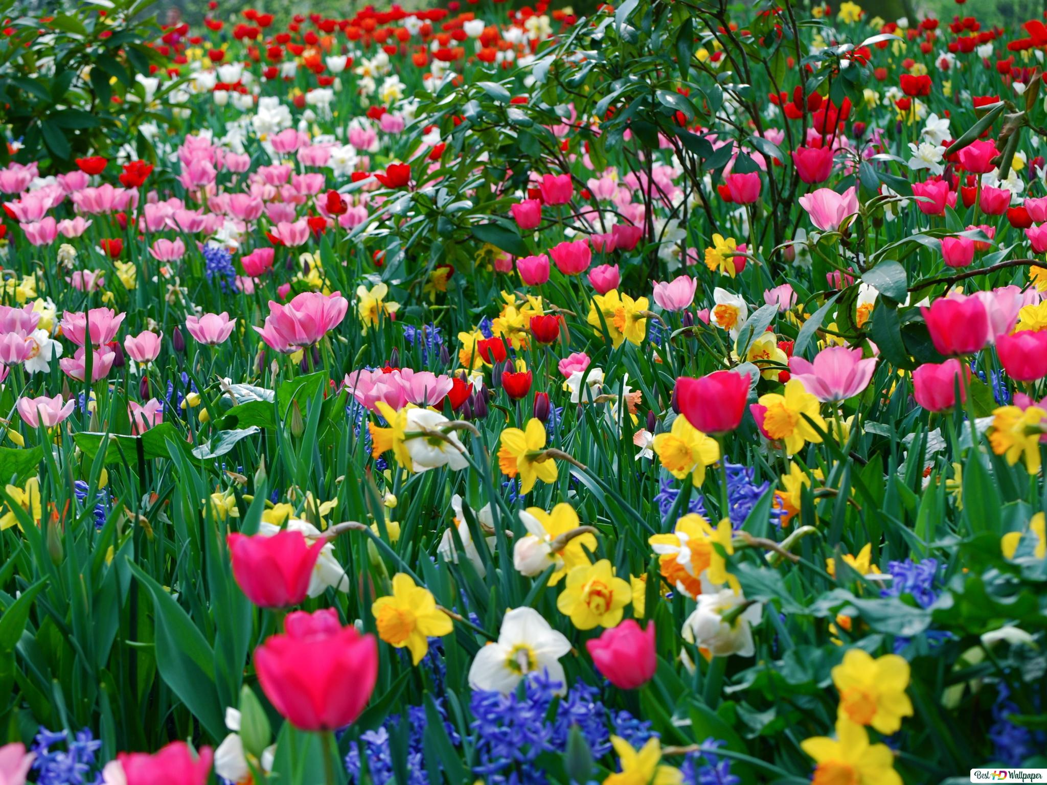 Amazing Colorful Flowers In The Field Hd Wallpaper Download