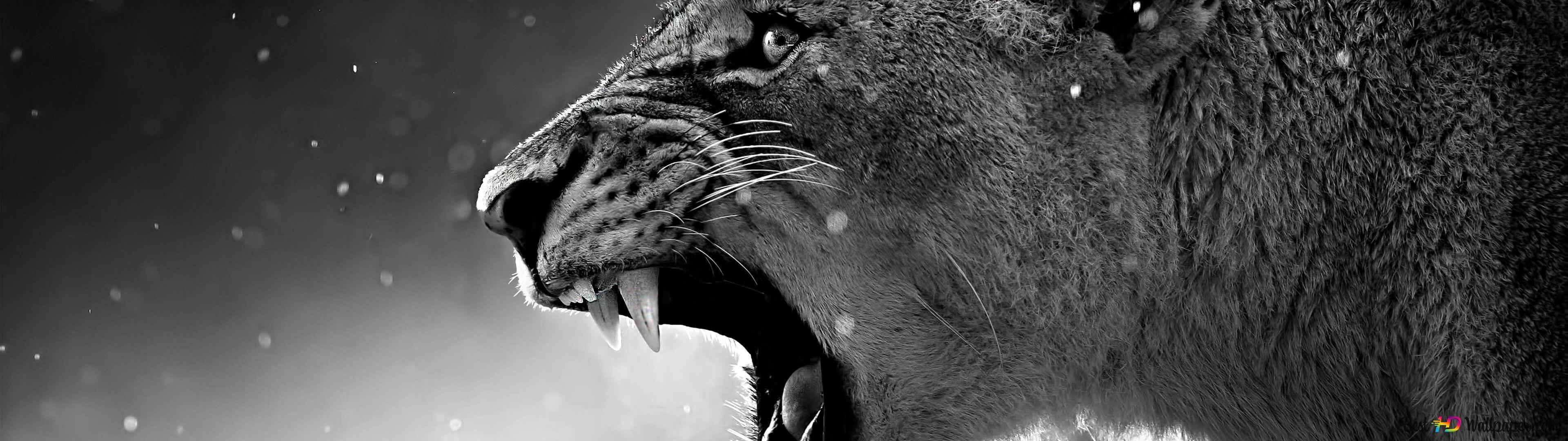 Angry White Lion Hd Wallpaper Vinny Oleo Vegetal Info