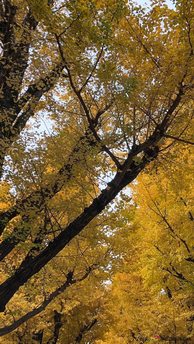 foto de automne japonais HD fond d'écran télécharger