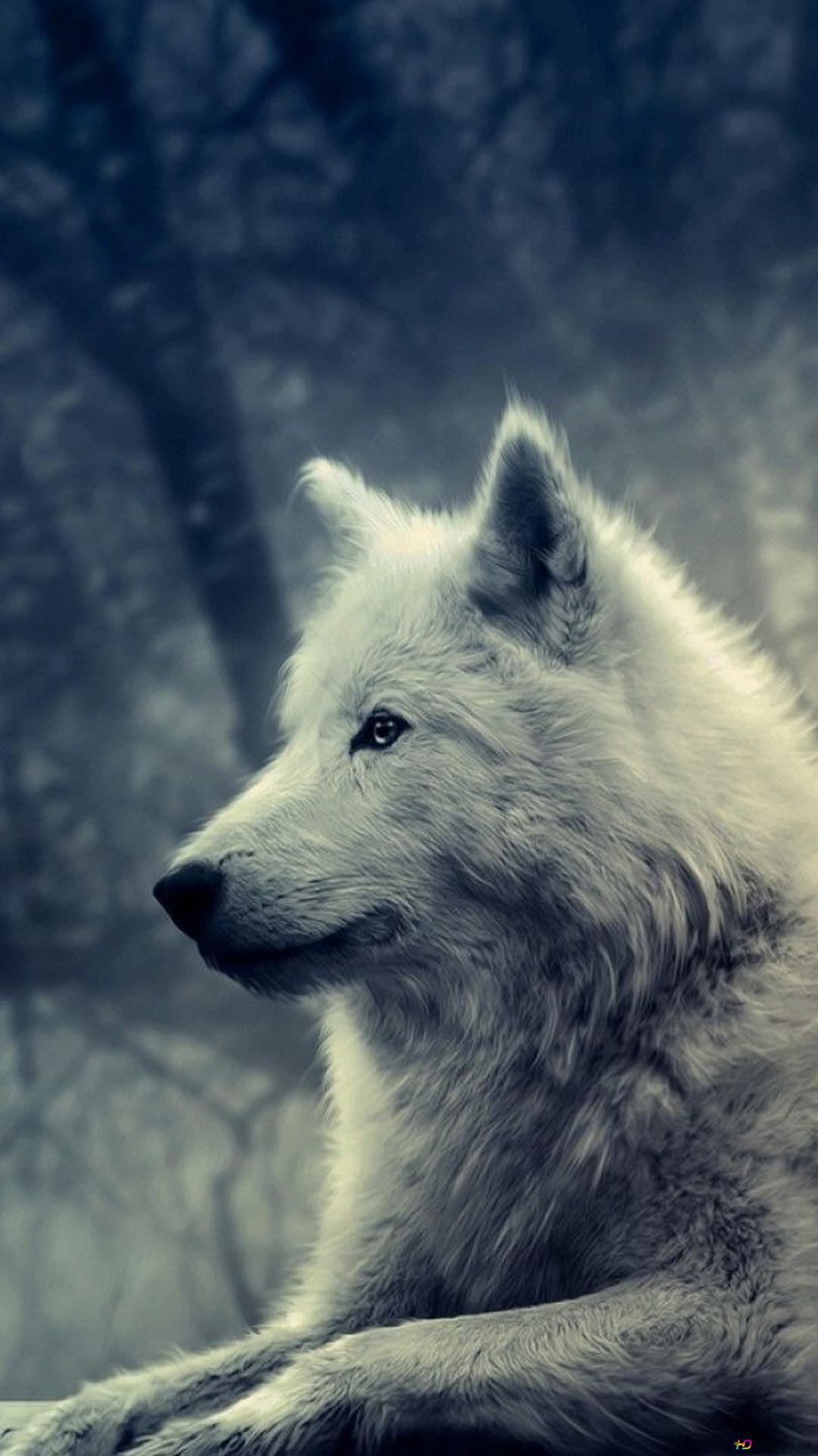 オオカミの家族 自然 冬 750x1334 Iphone 8 7 6 6s 壁紙 背景 画像
