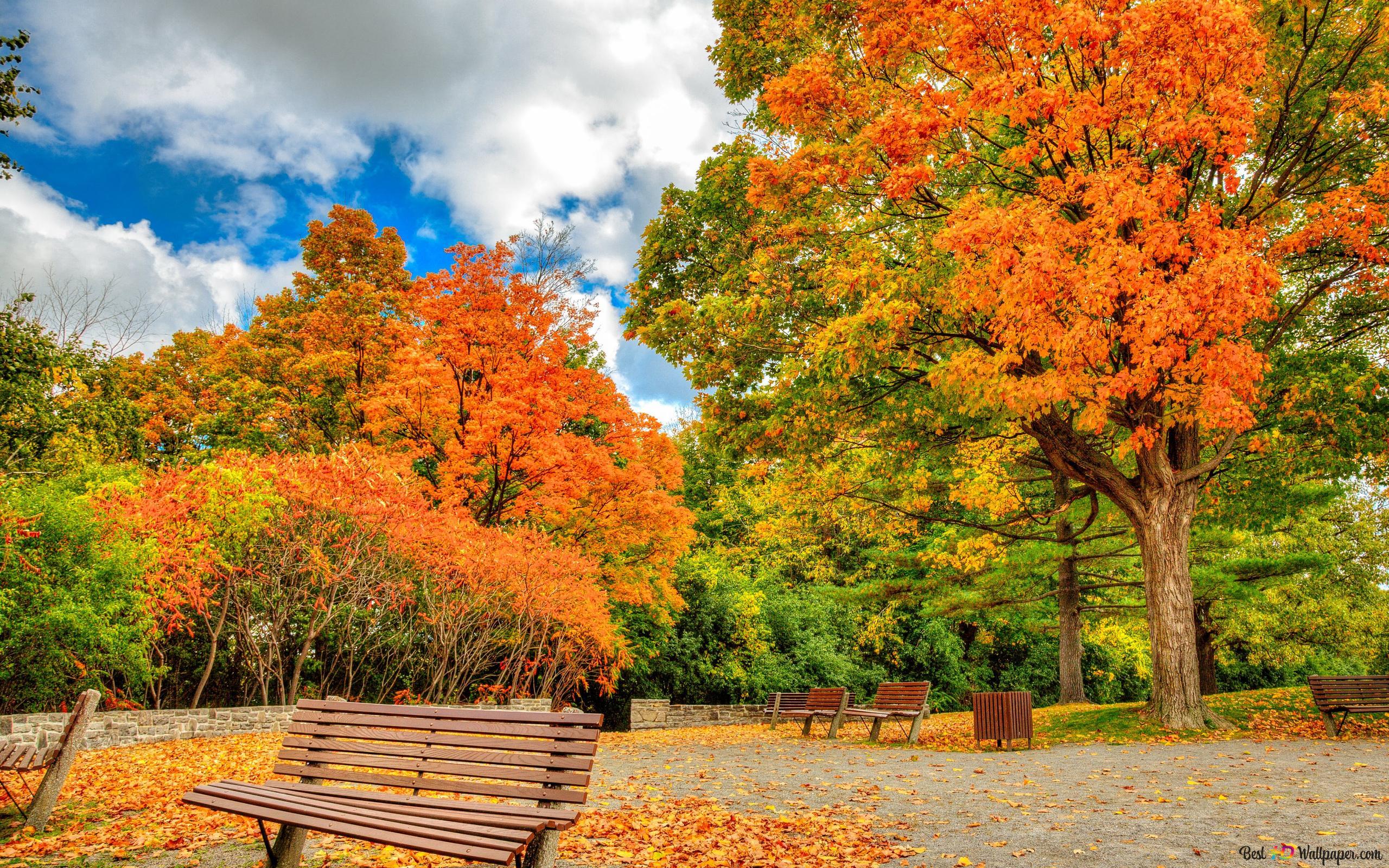 foto de Banc dans le parc d'automne HD fond d'écran télécharger