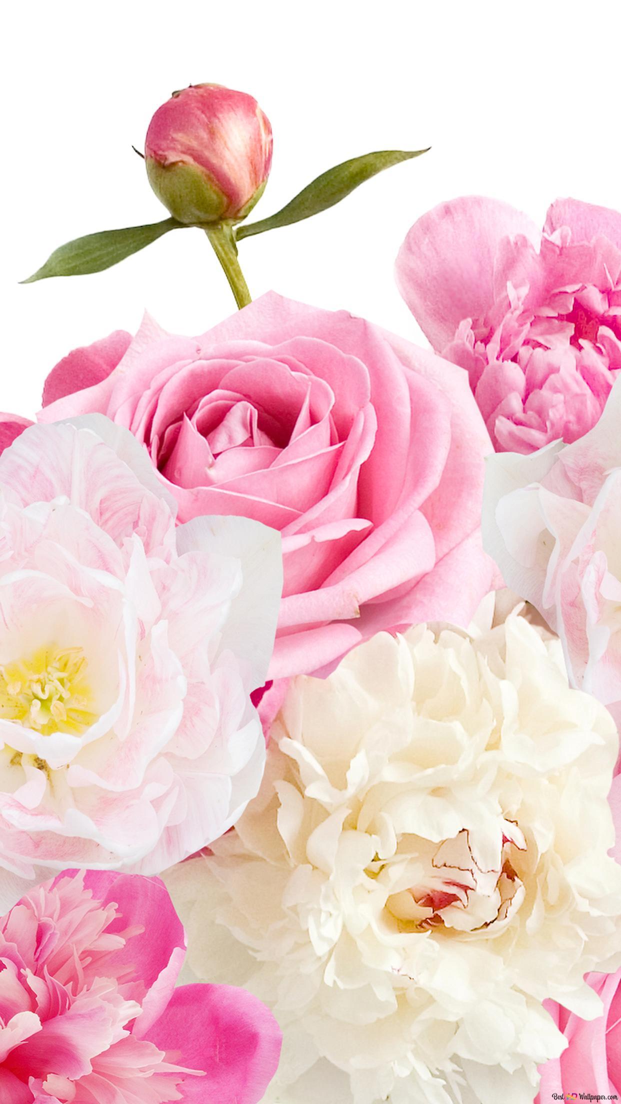 バレンタインデー 素敵なピンクと白の花 Hd壁紙のダウンロード