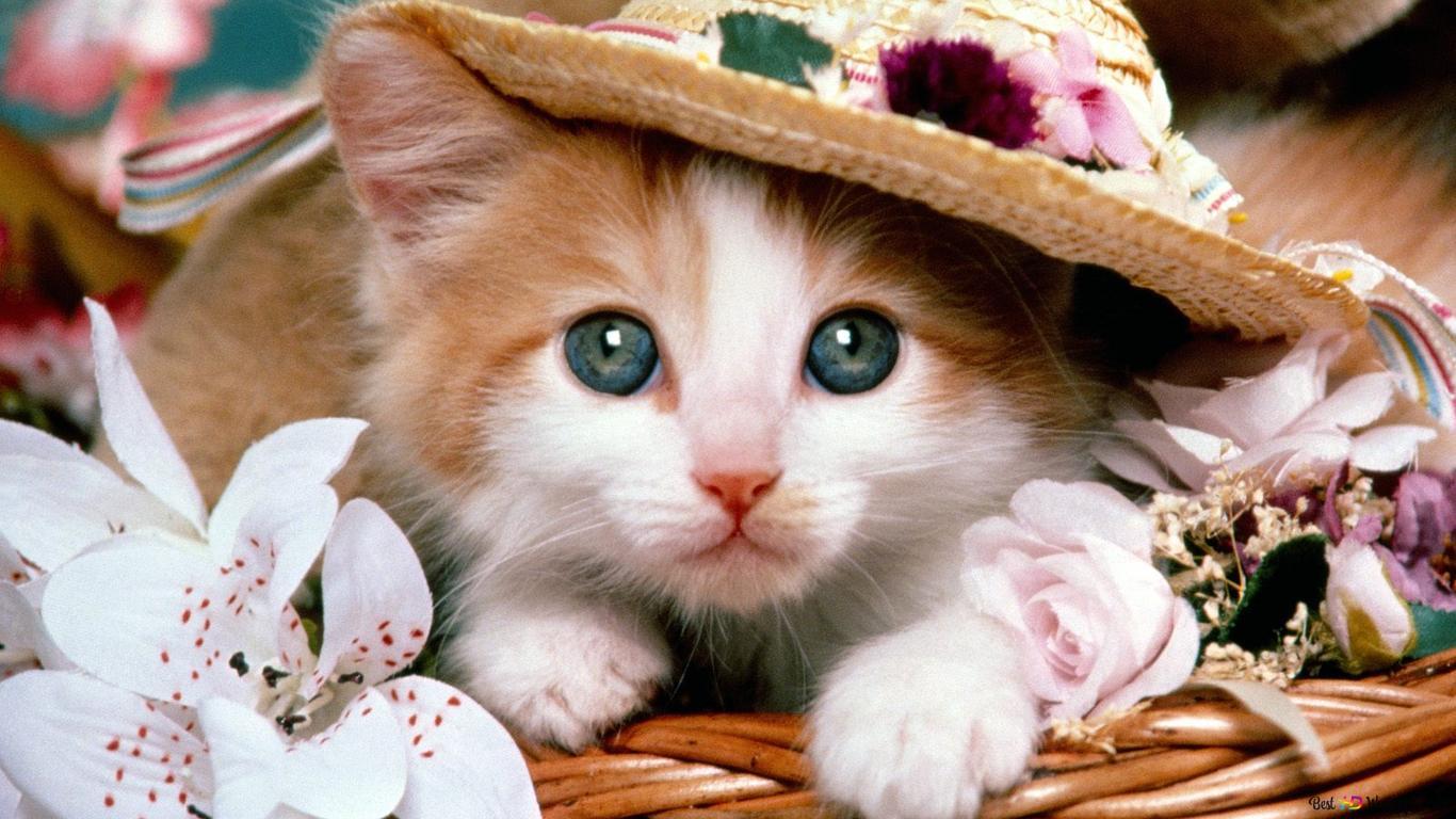 バスケットでかわいい猫 Hd壁紙のダウンロード