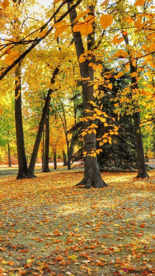 foto de Beau paysage d'automne HD fond d'écran télécharger