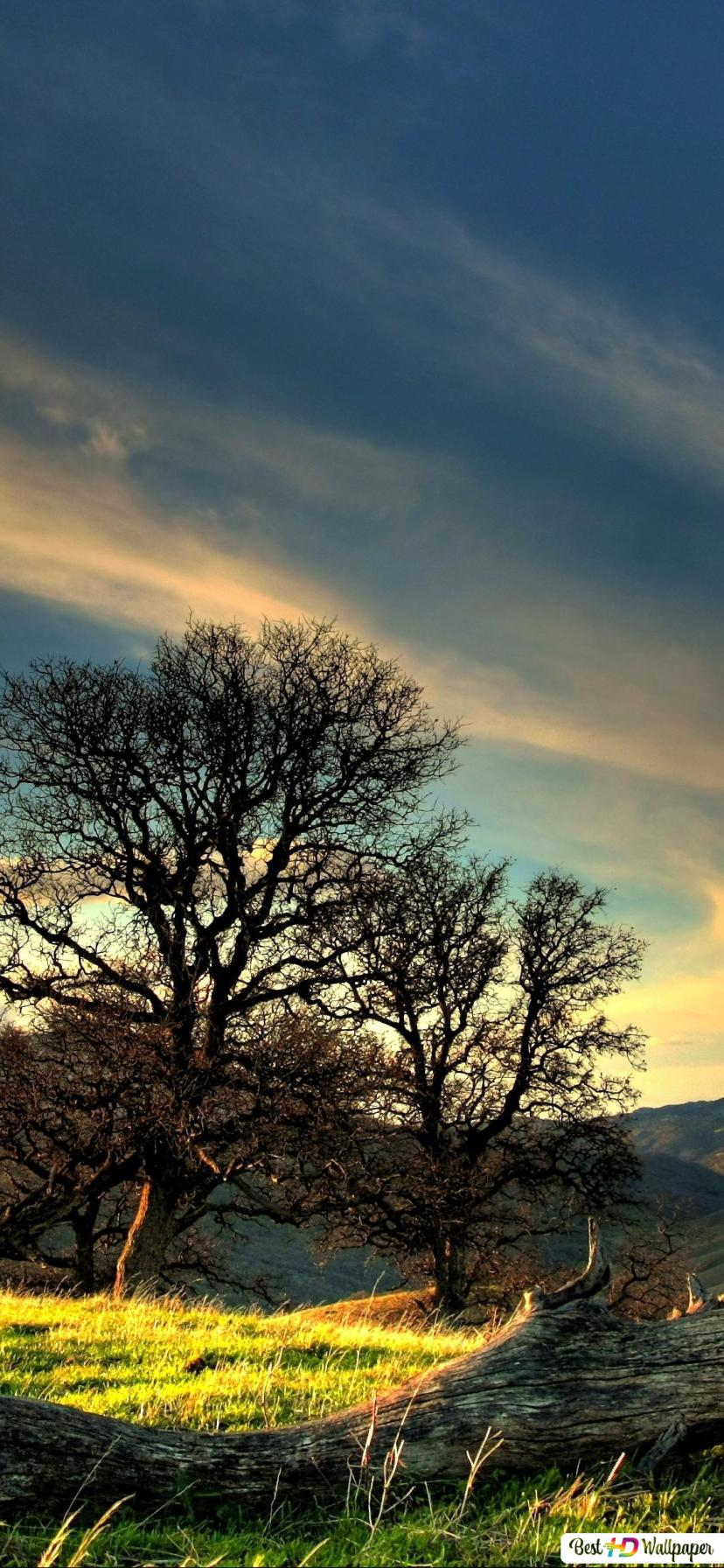 Beautiful Landscape Background View Hd Wallpaper Download