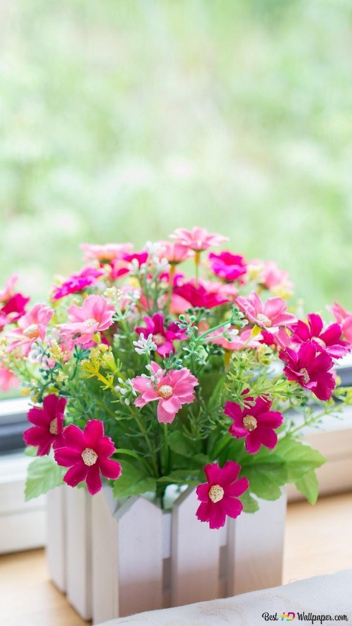 Beautiful Pink Flower Background Hd Wallpaper Download