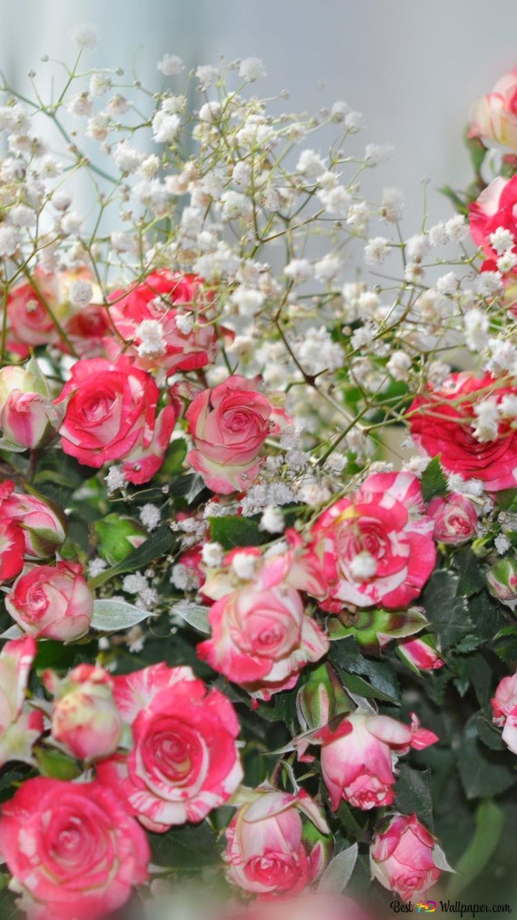 Beautiful Pink Roses Hd Wallpaper Download
