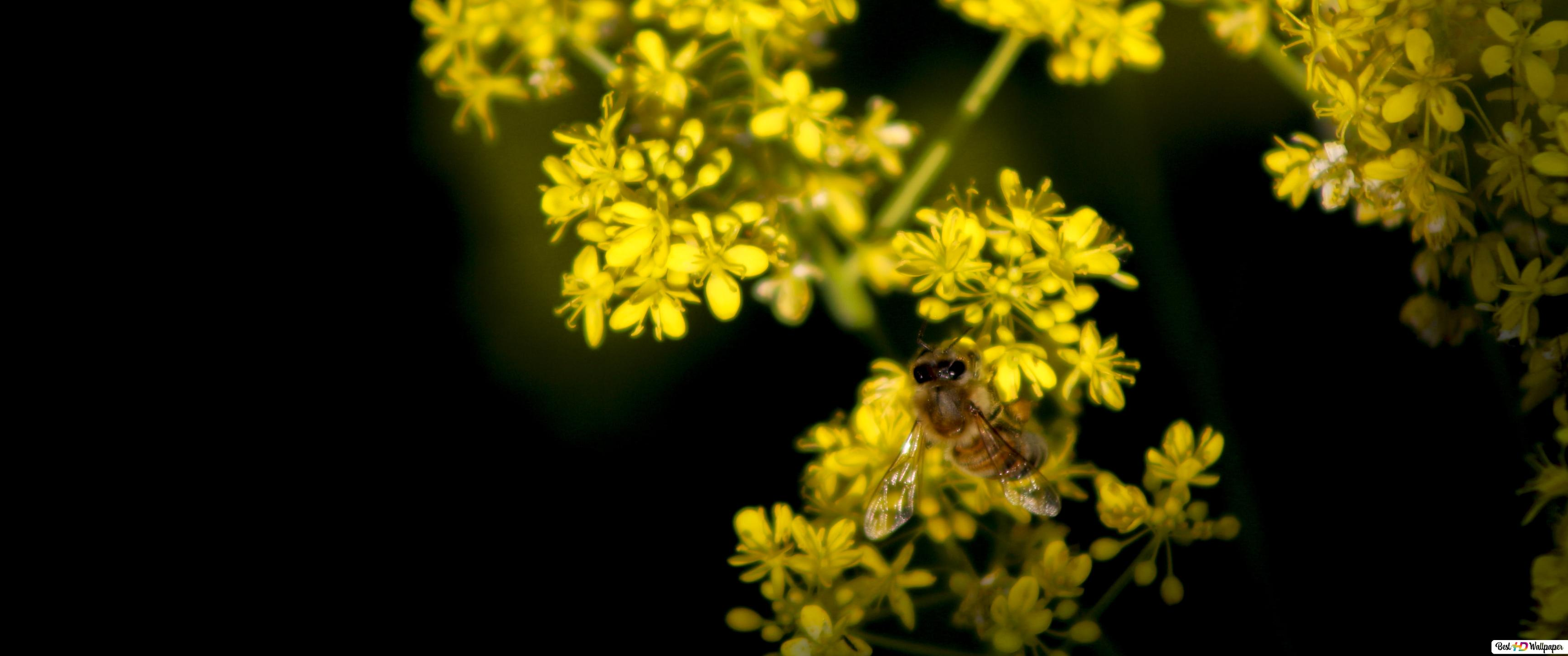 Bee And Yellow Flowers Hd Wallpaper Download