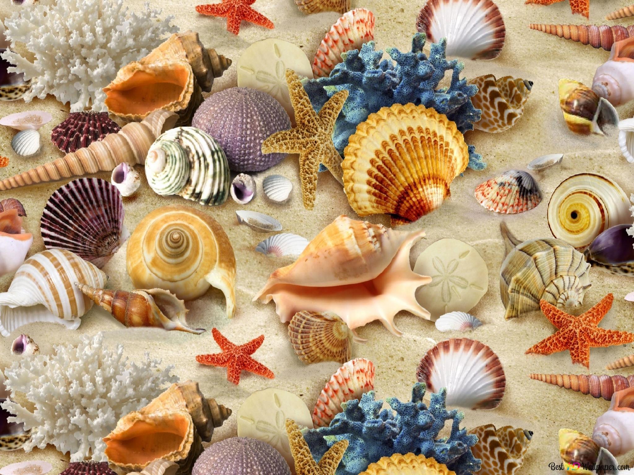 貝殻 Hd壁紙のダウンロード