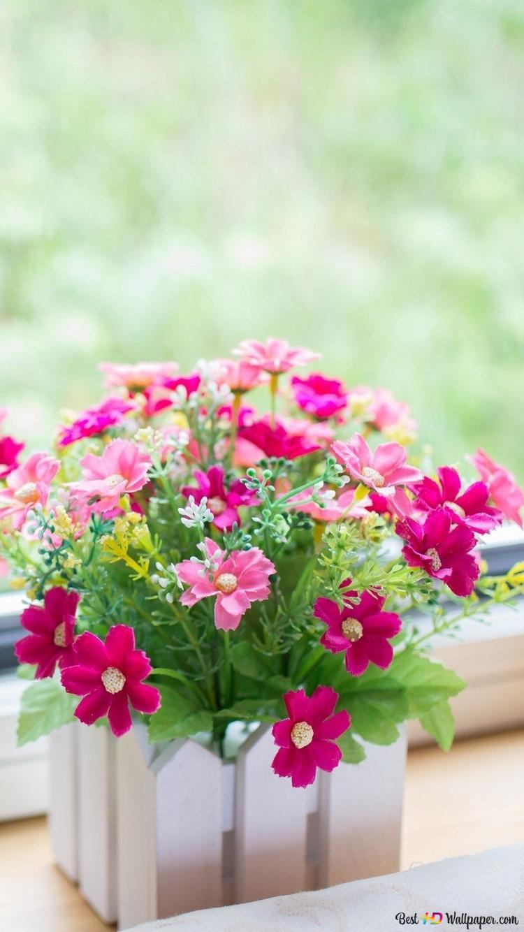 Fiori rosa sfondo hd
