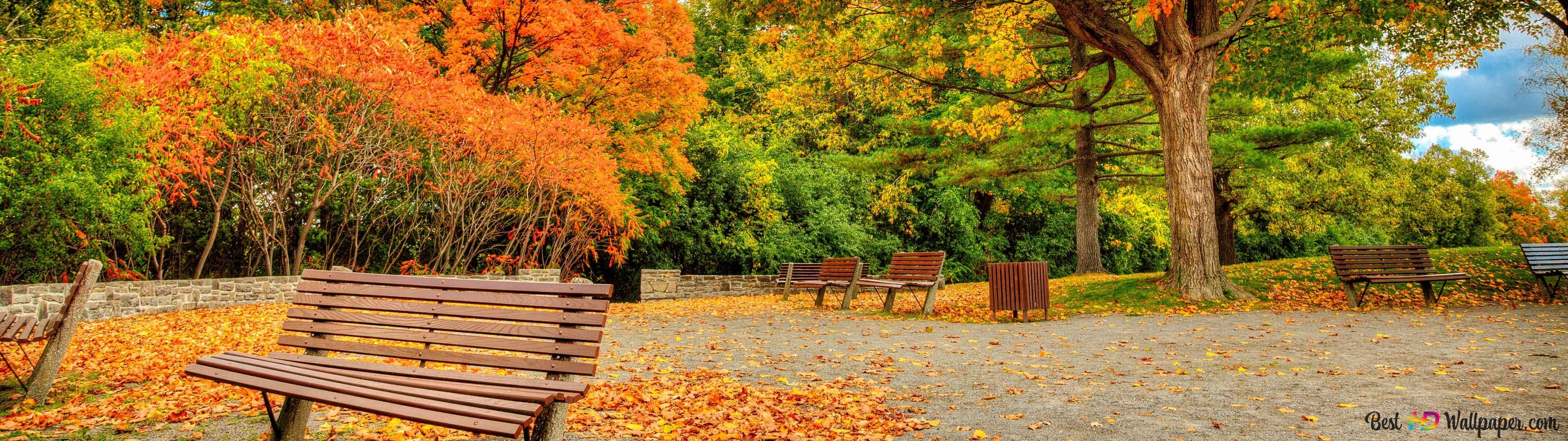 Bench In Autumn Park Hd Wallpaper Download