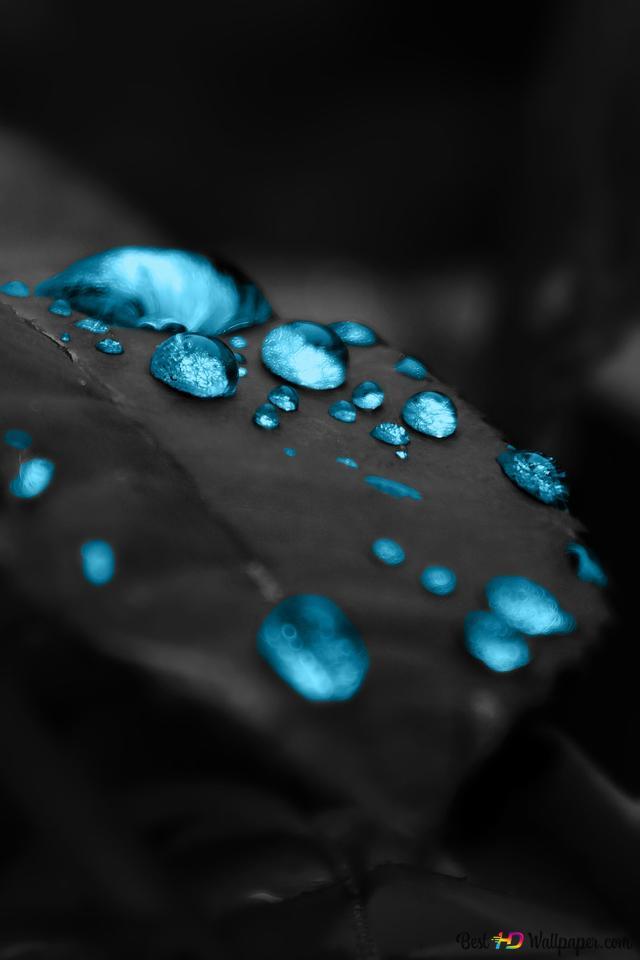 biru tetes dalam daun wallpaper 640x960 10344 169