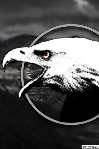 Black And White Eagle Hd Wallpaper Download