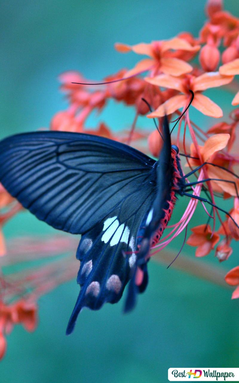 black butterfly in the flowers wallpaper 800x1280 11168 198