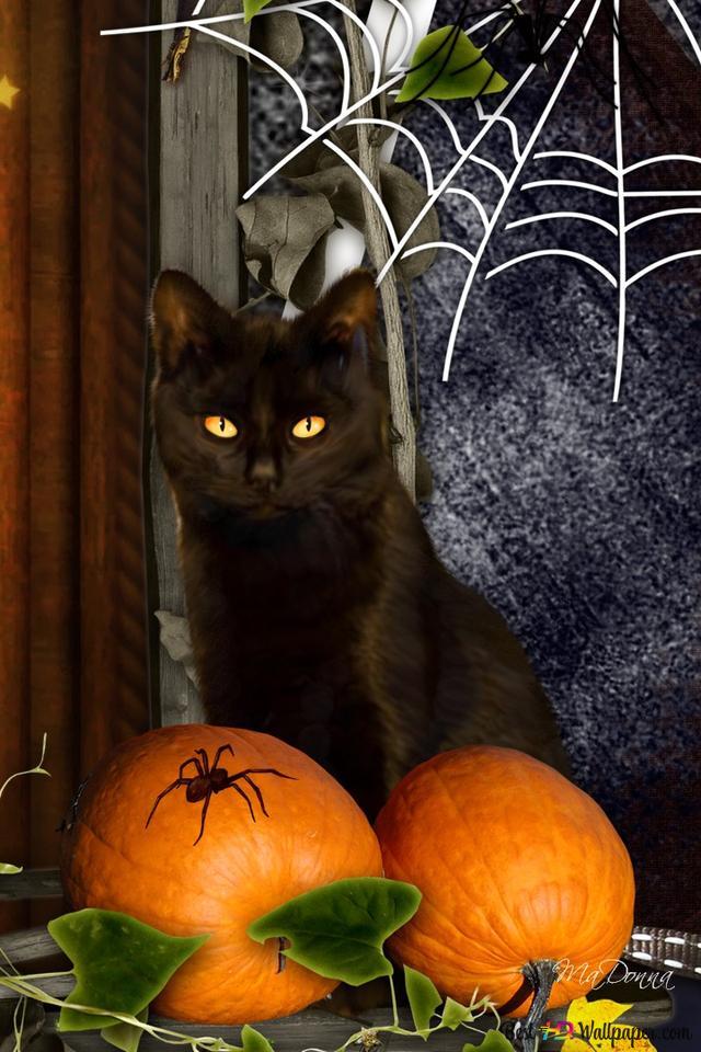 Iphone Halloween Wallpaper Black Cat