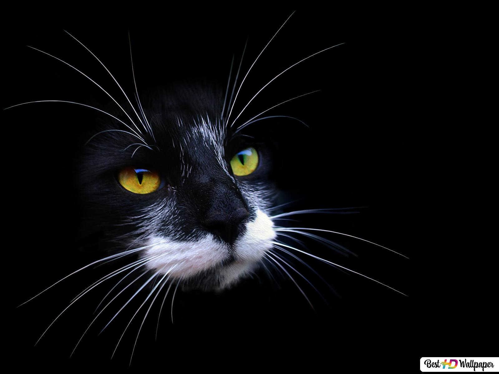 Black Cat With Yellow Eyes And Long Whiskers In A Black Background Hd Wallpaper Download