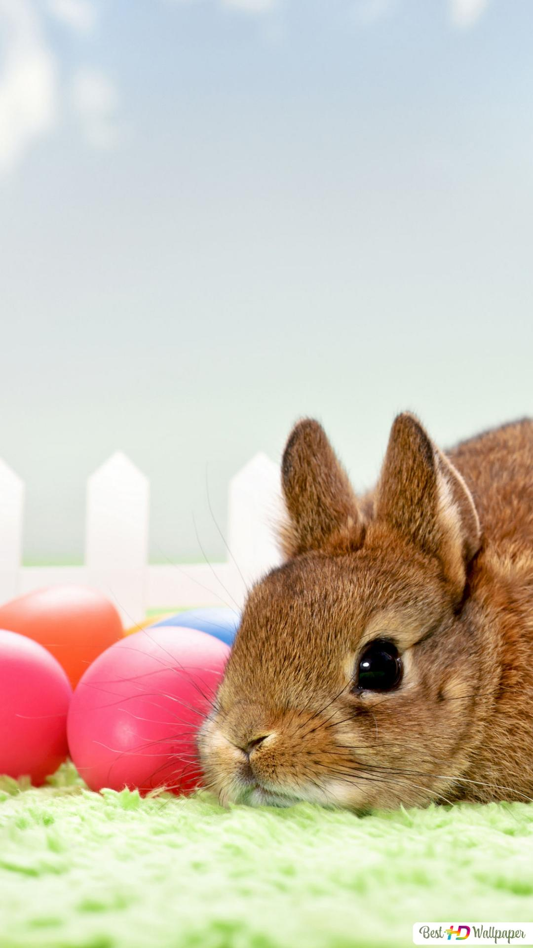 Brown Adorable Bunny And A Bunch Of Tulips With Easter Eggs Hd