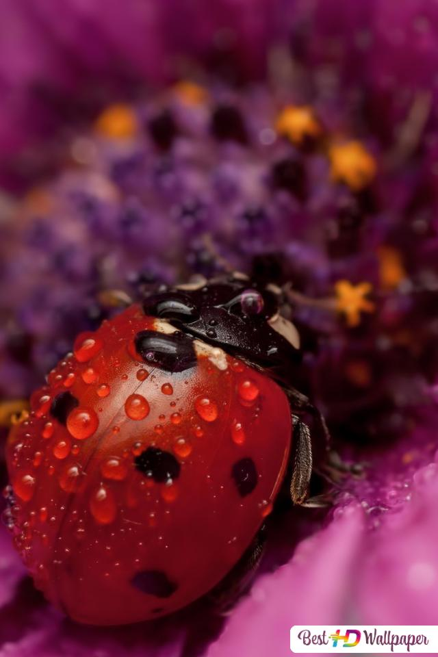 Bubamara U Cvijetu Preuzimanje Hd Pozadina