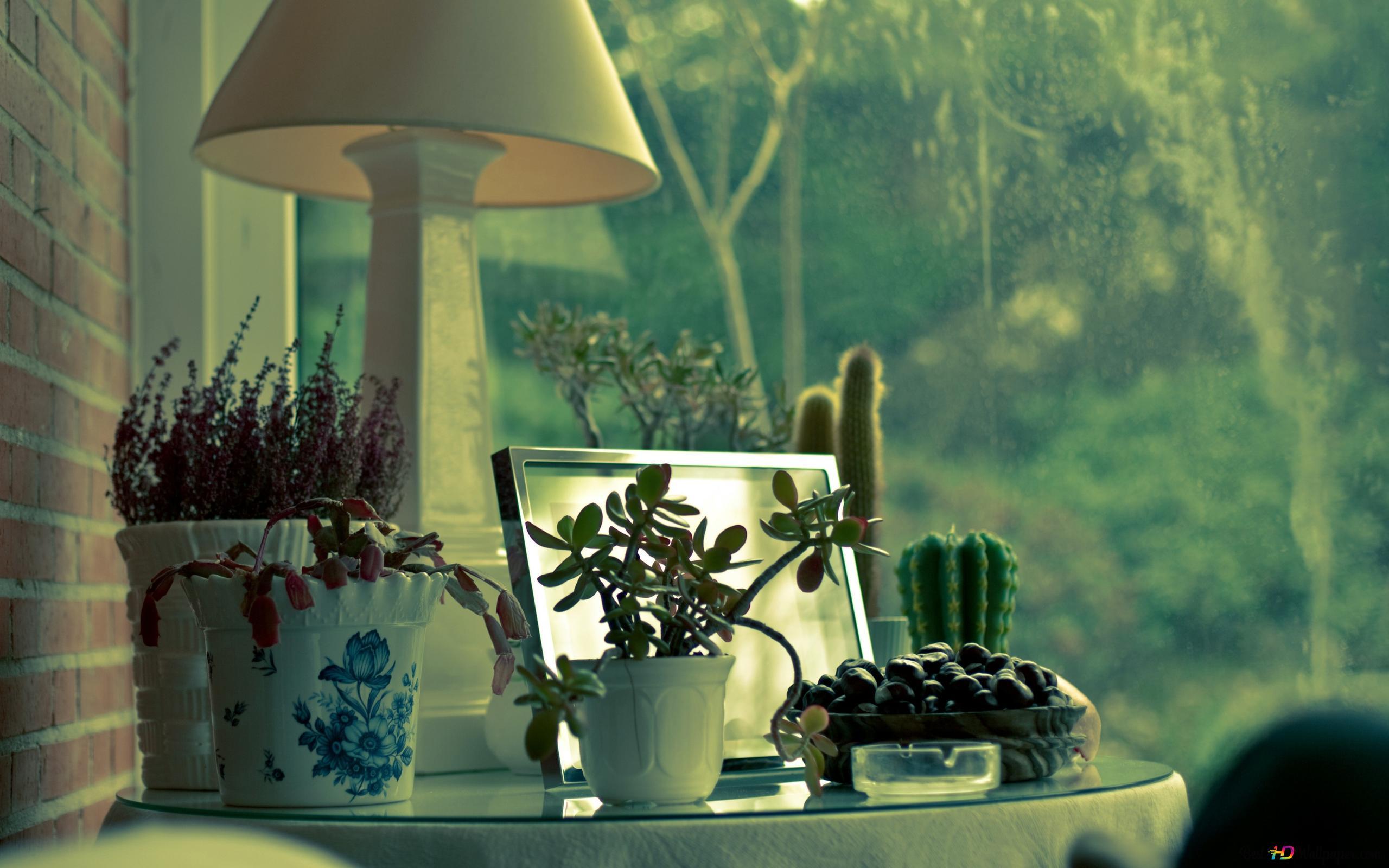 Cactus Plants Hd Wallpaper Download
