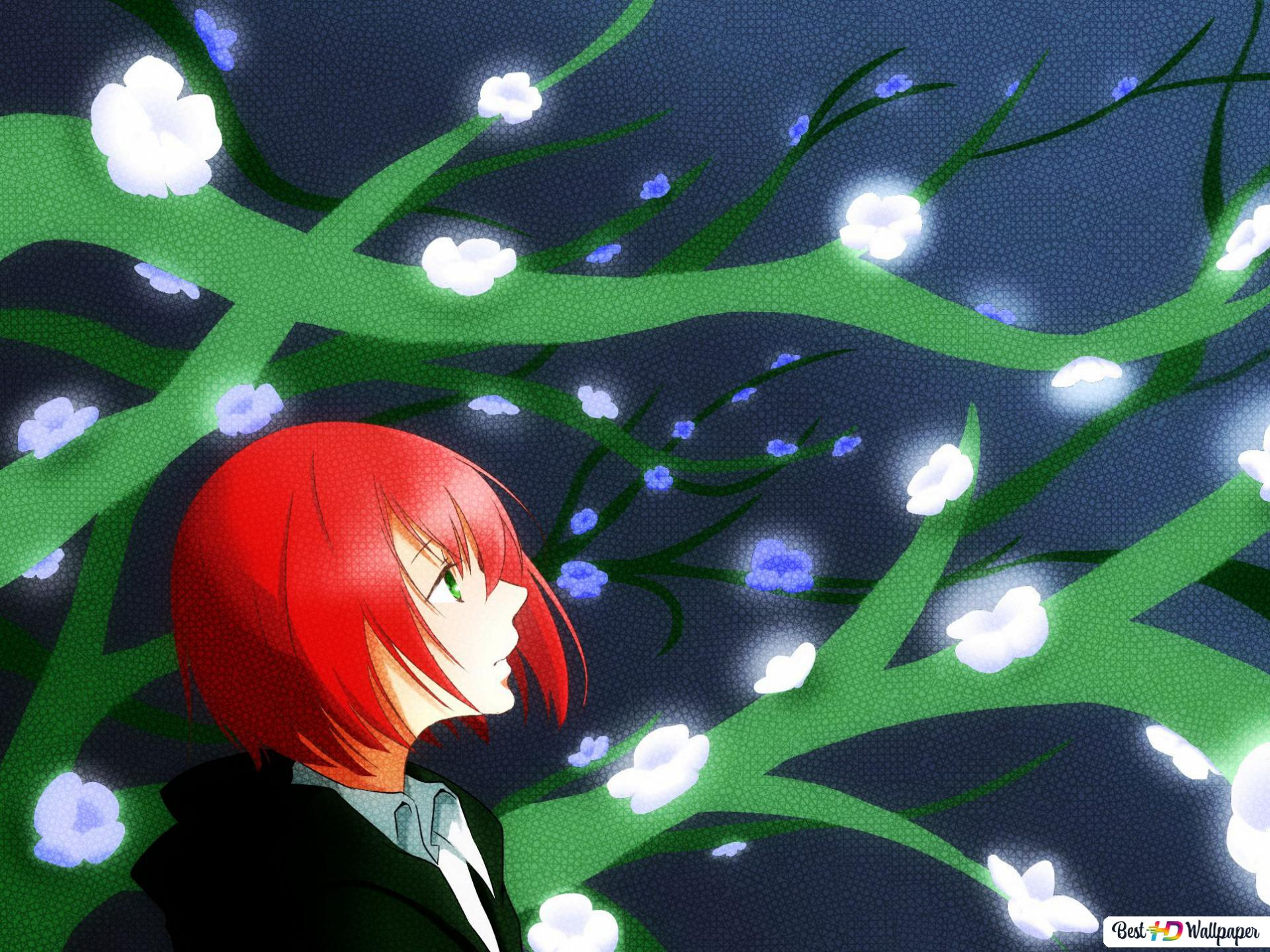 Chise Hatori The Ancient Magus Bride Hd Wallpaper Download
