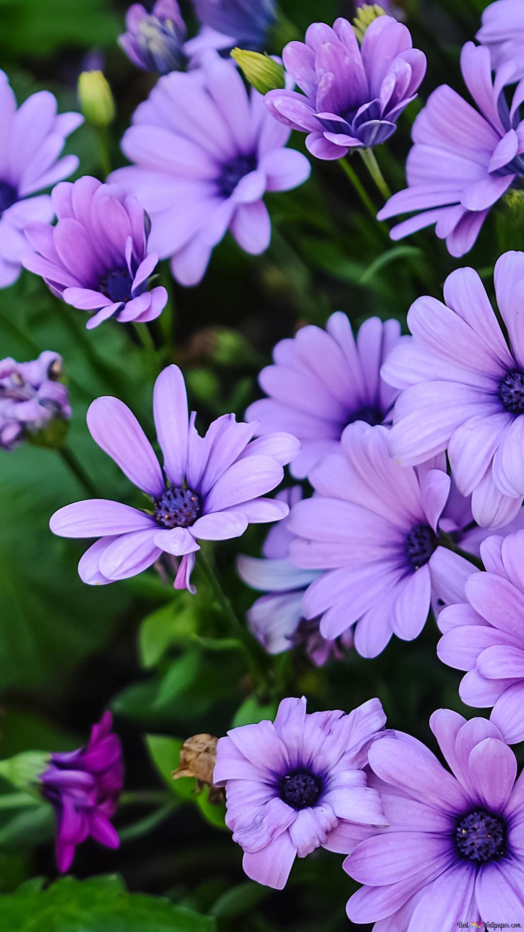Colorful Beautiful Flowers Hd Wallpaper Download