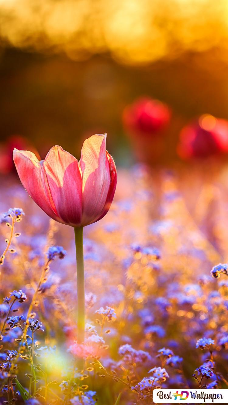 Colorful Flowers Field Hd Wallpaper Download