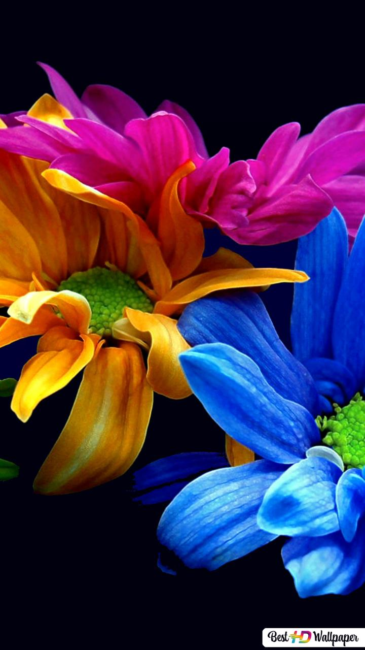 Colorful Petals HD Wallpaper Download