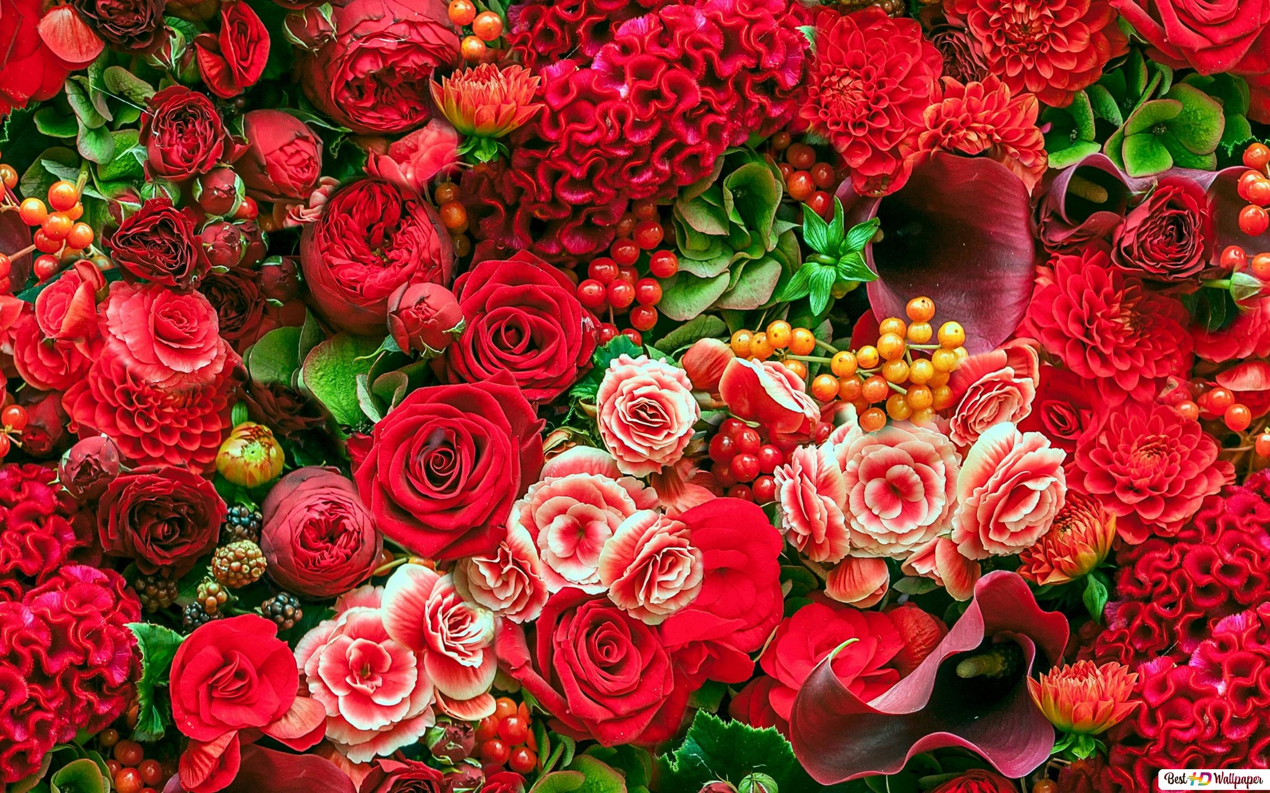 Colorful red flowers HD wallpaper download