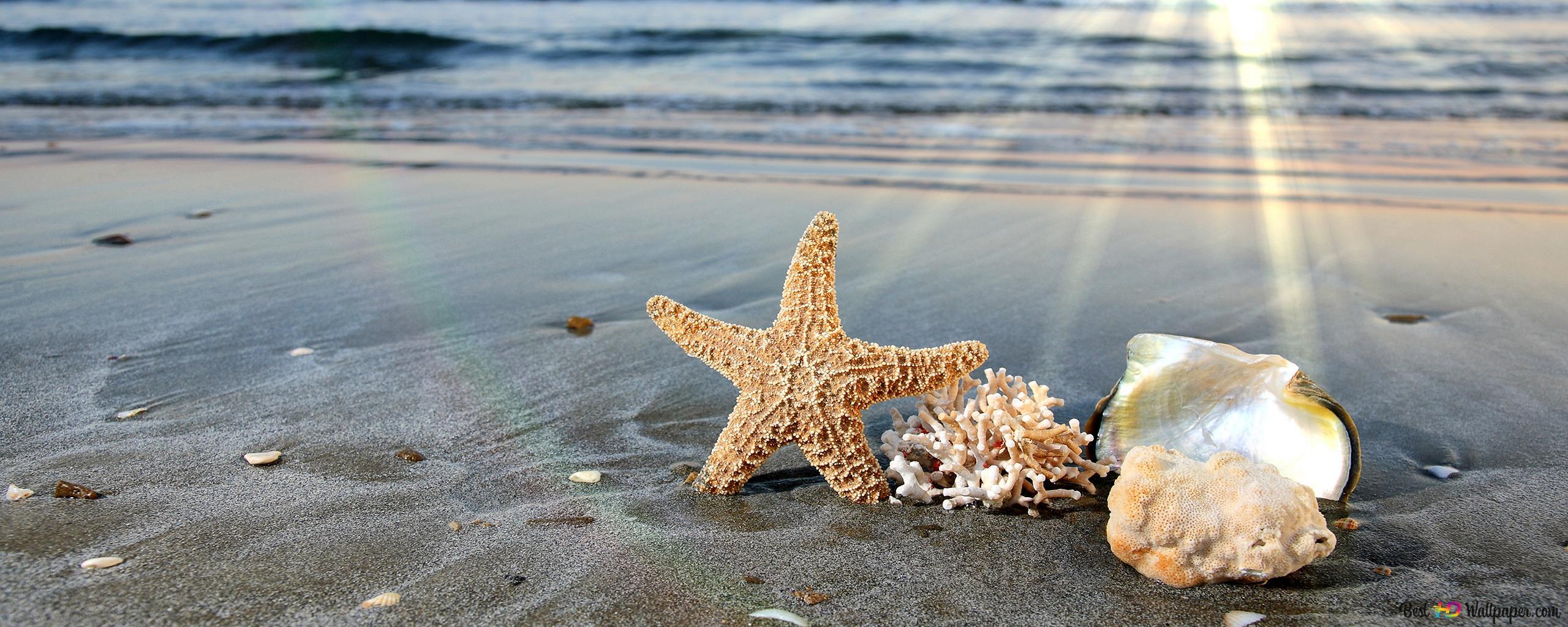 Conchiglie Di Mare In Spiaggia Download Di Sfondi Hd