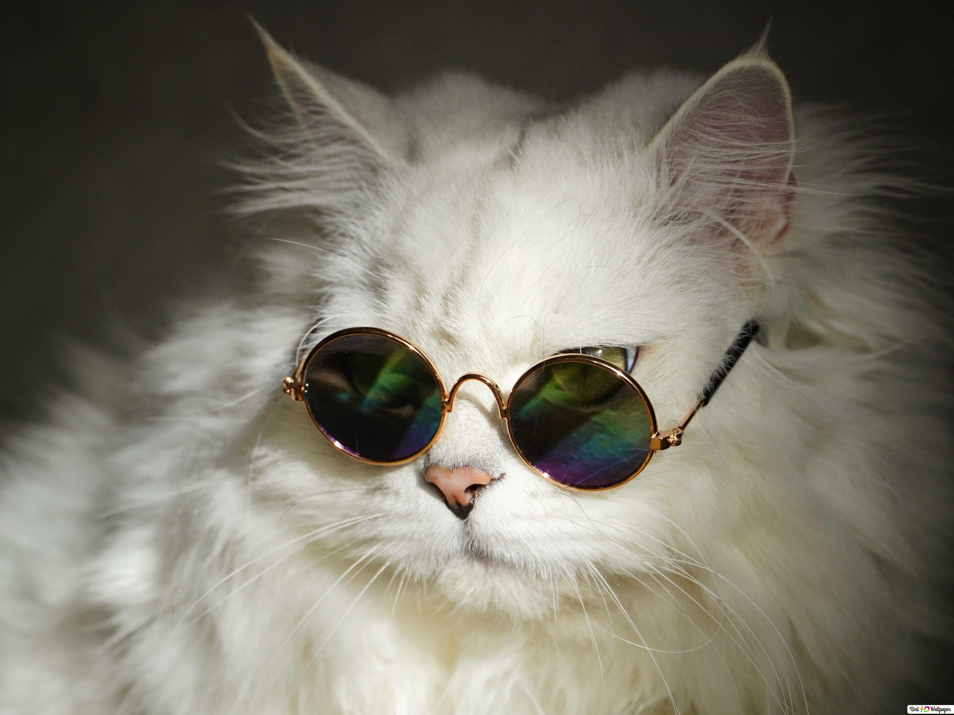 Cool white cat with round sunglasses HD wallpaper download
