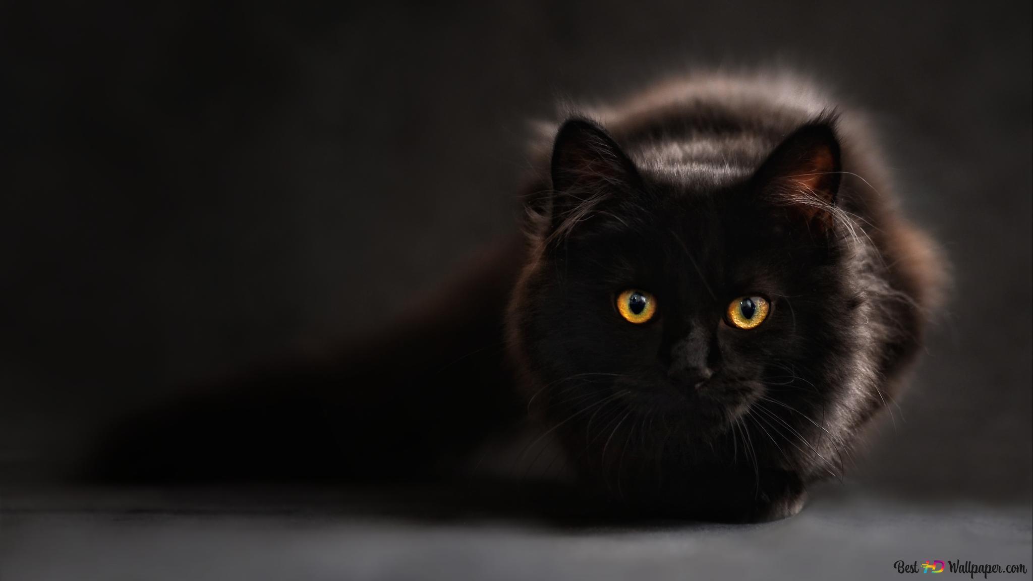 Cute Black Cat Hd Wallpaper Download