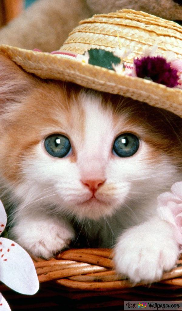Cute Cat In Basket Hd Wallpaper Download