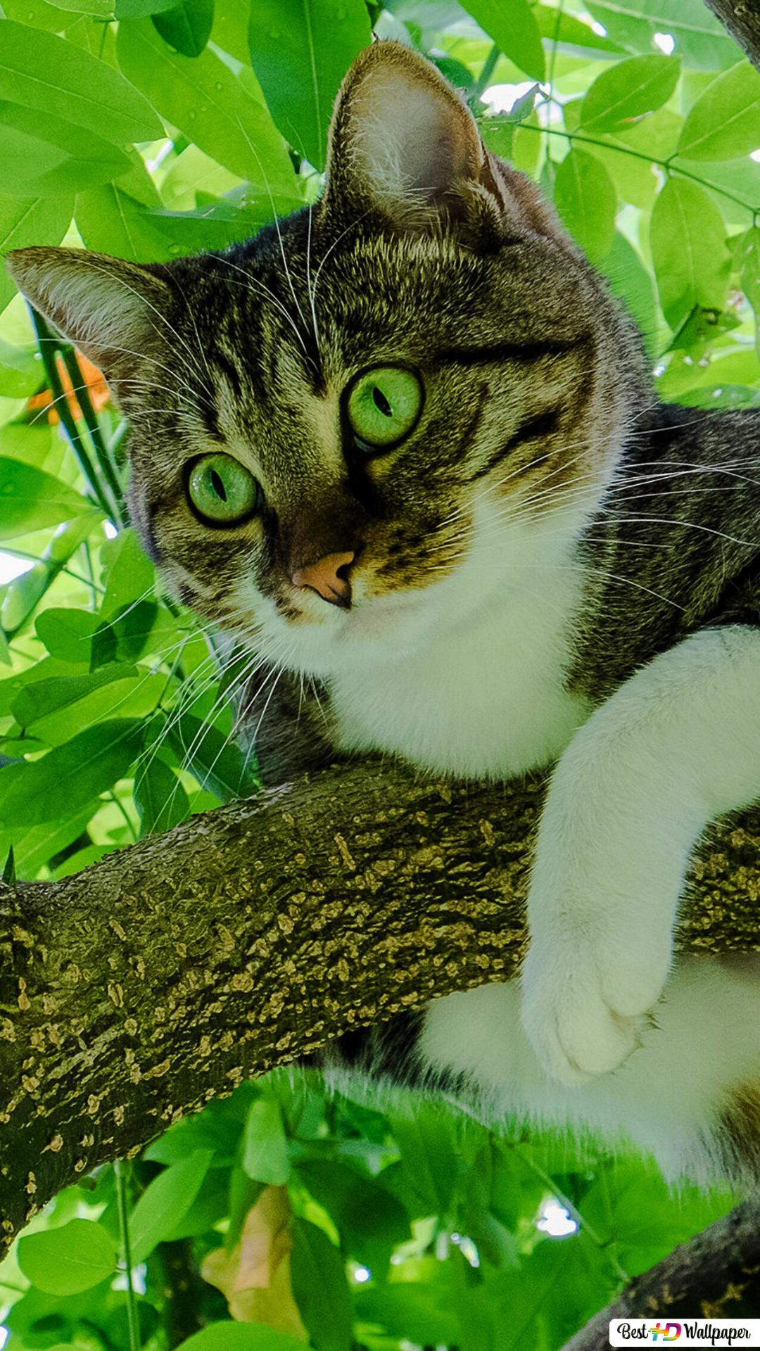 Cute Cat In Tree Hd Wallpaper Download