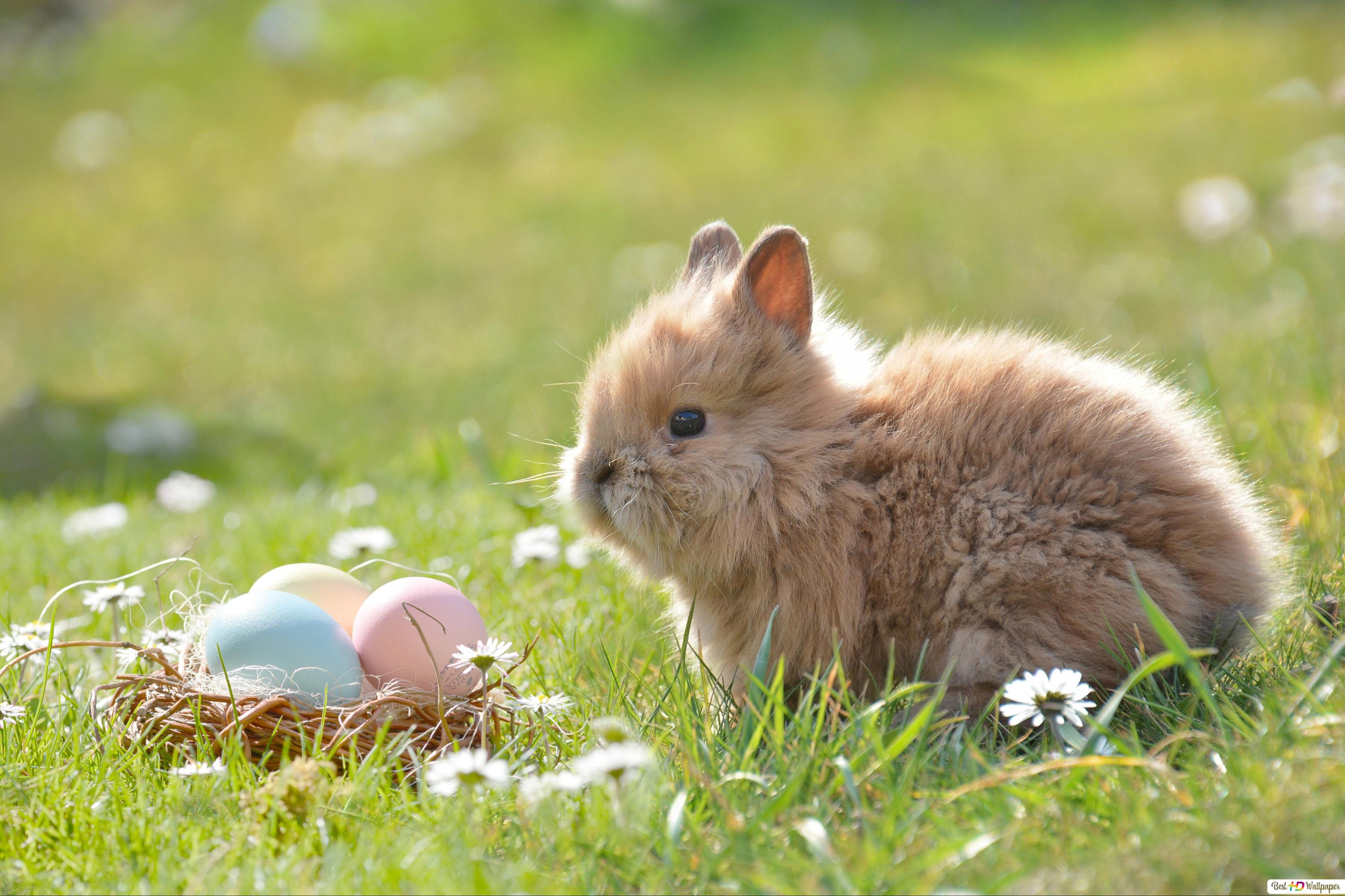 Cute Easter Bunny Hd Wallpaper Download