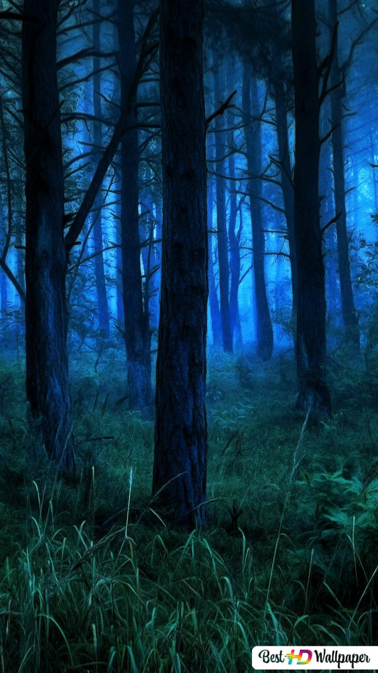 Dark And Misty Forest At Night Hd Wallpaper Download