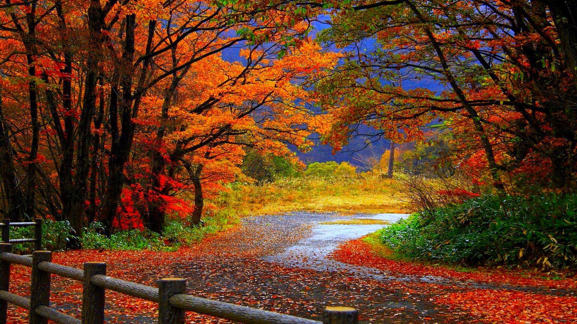 foto de De beaux paysages d'automne HD fond d'écran télécharger