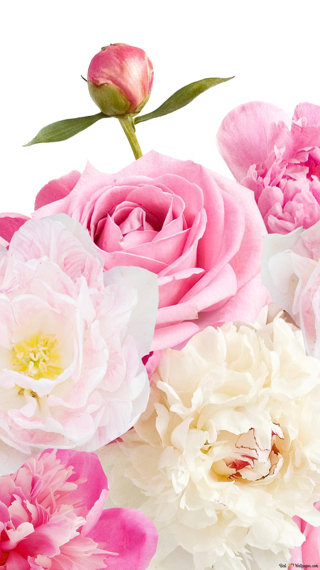 Descargar Fondo De Pantalla Dia De San Valentin Rosa Precioso Y