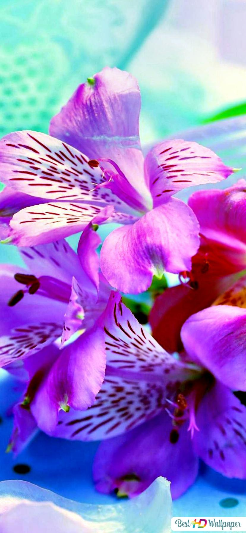 Die Schonheit Einer Orchidee Hd Hintergrundbilder Herunterladen