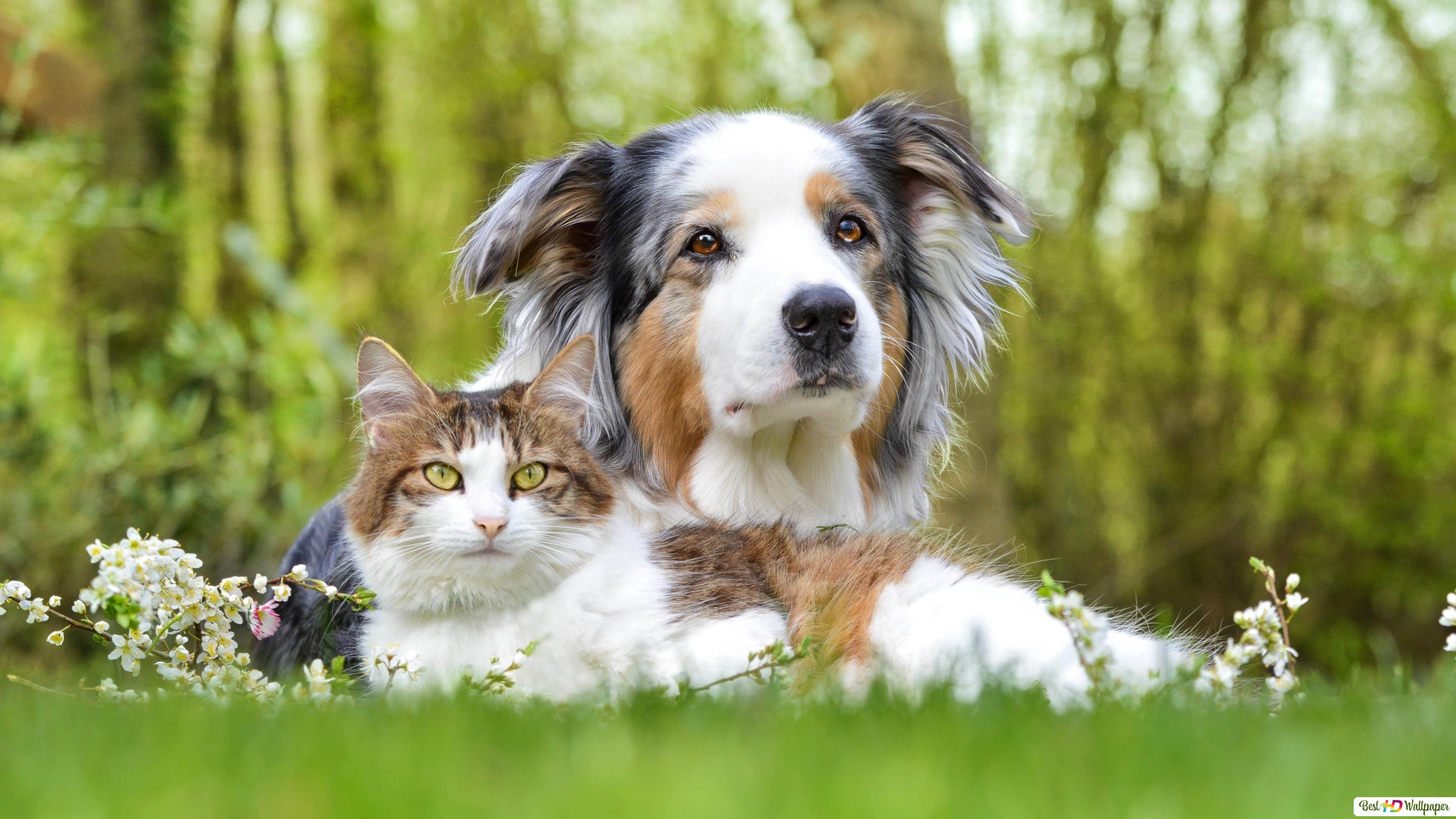 Dog And Cat Hd Wallpaper Download