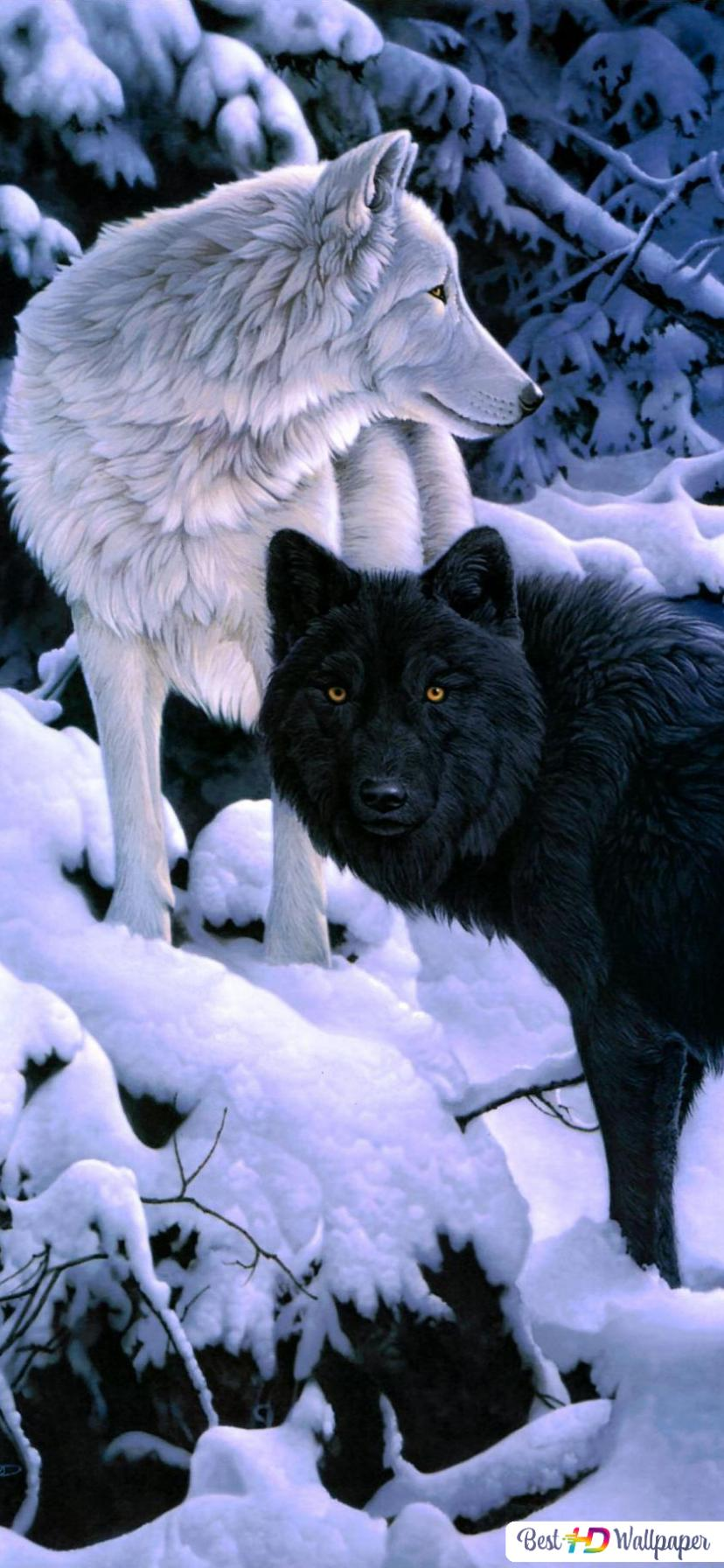 冬の森でオオカミ Hd壁紙のダウンロード
