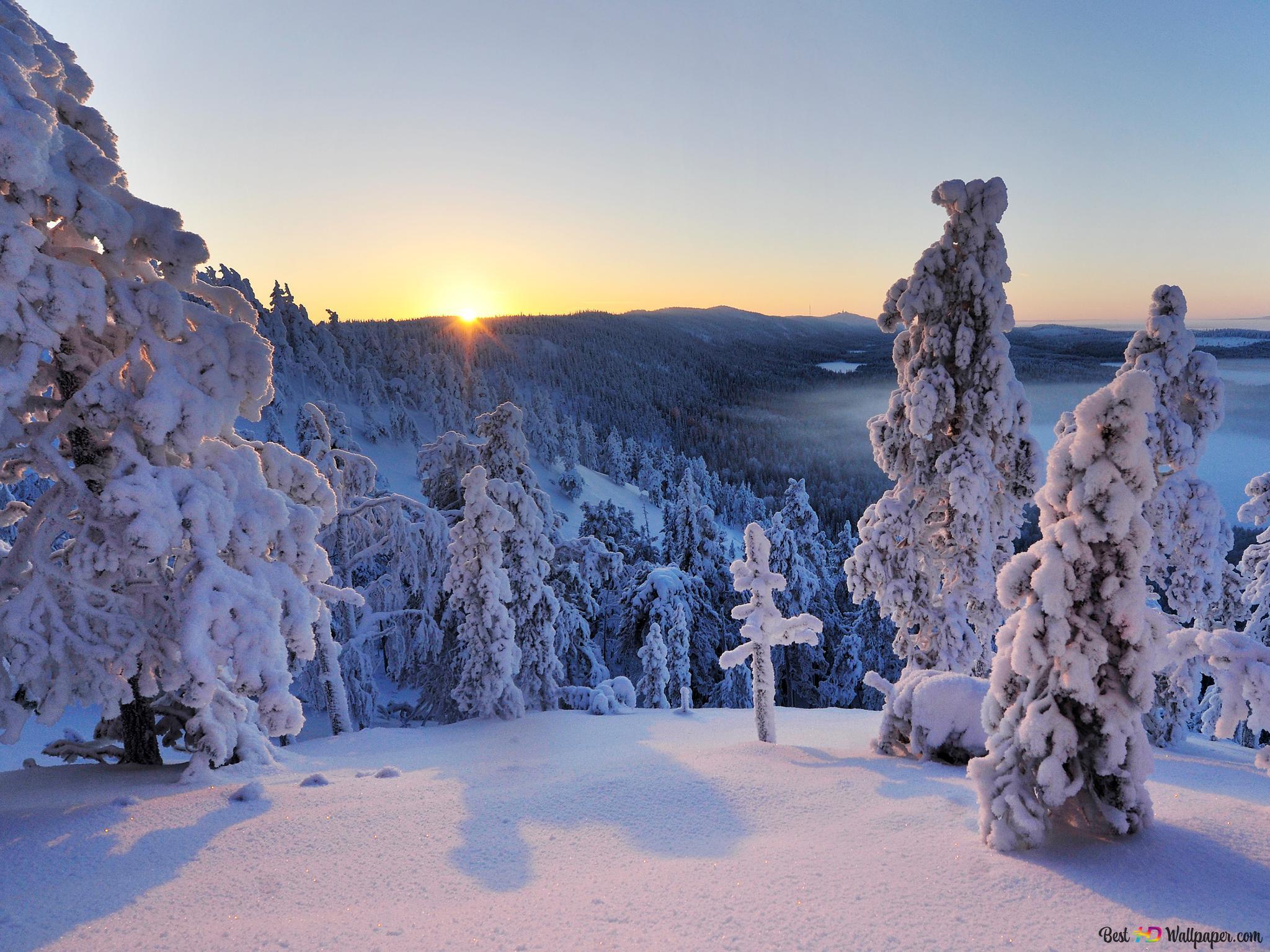 冬の夕日の森 Hd壁紙のダウンロード