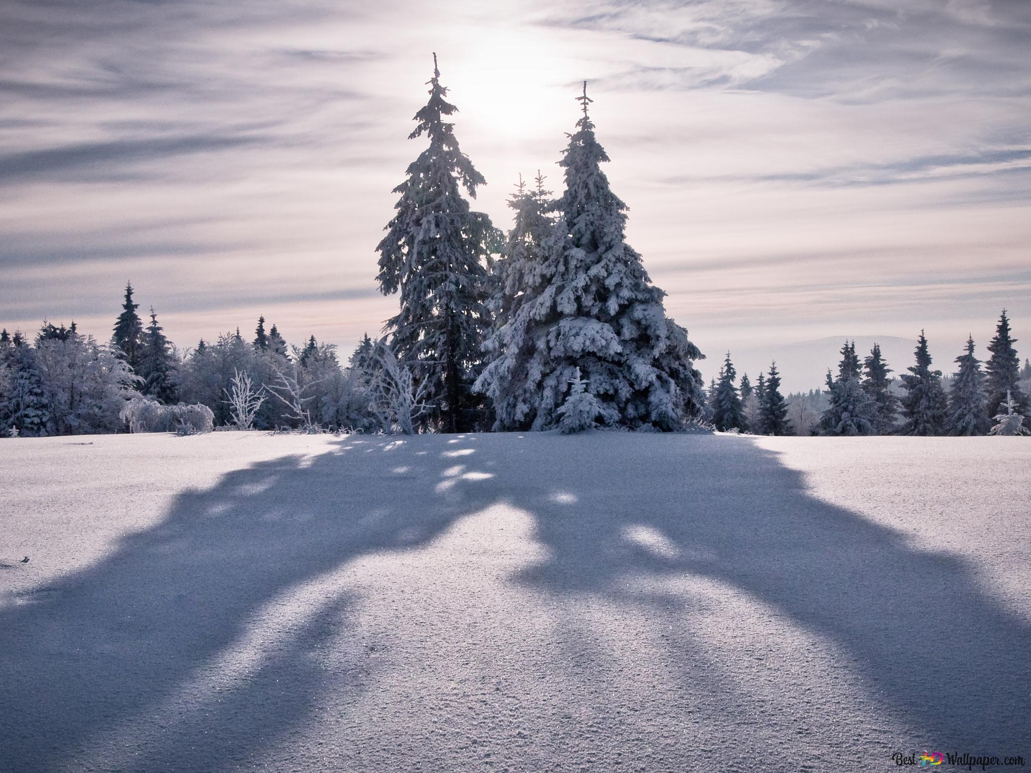 冬の雪の背景 Hd壁紙のダウンロード