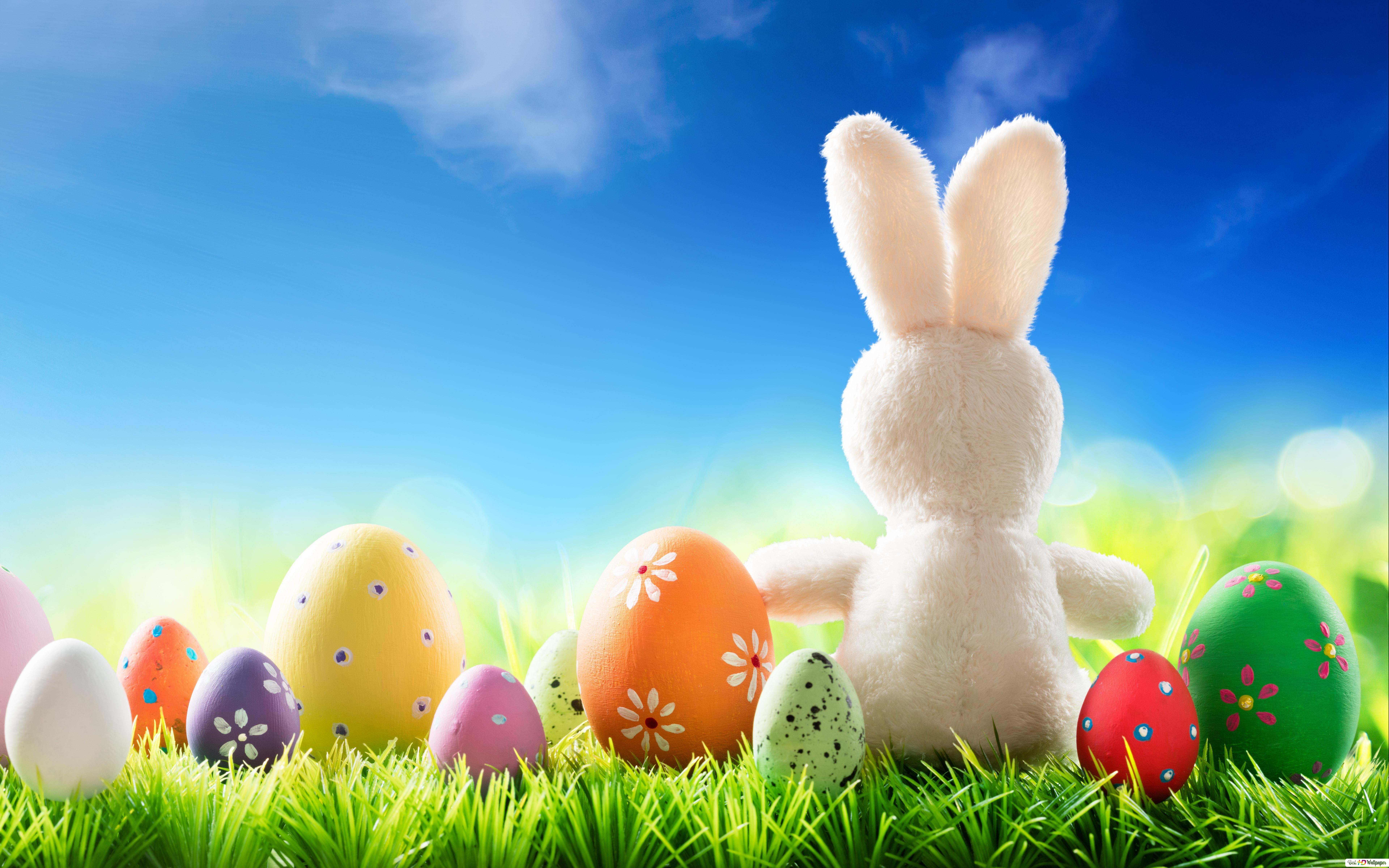 Easter Bunny Eggs Hd Wallpaper Download