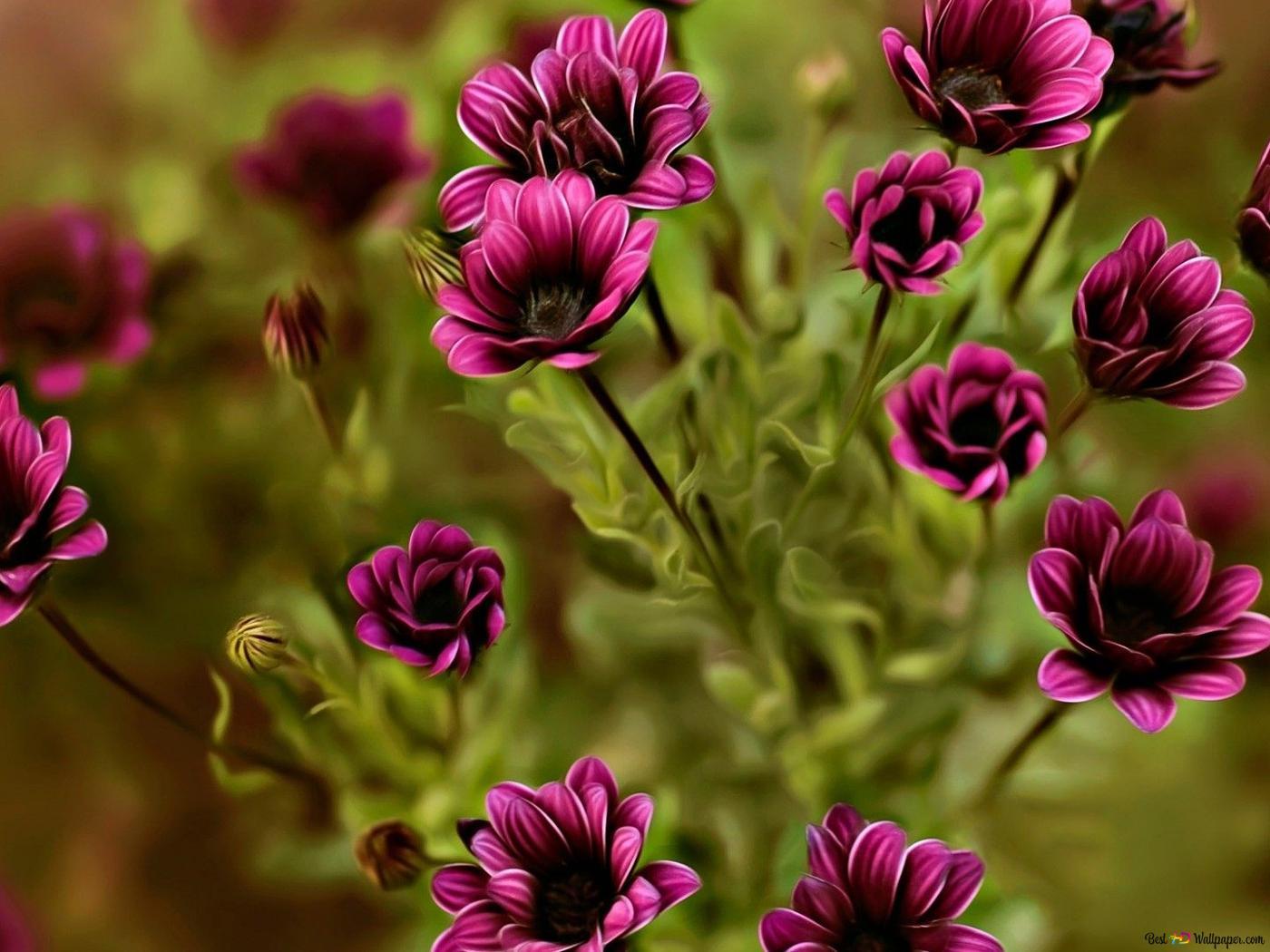 Foto Fiori Viola.Fiori Viola Close Up Download Di Sfondi Hd