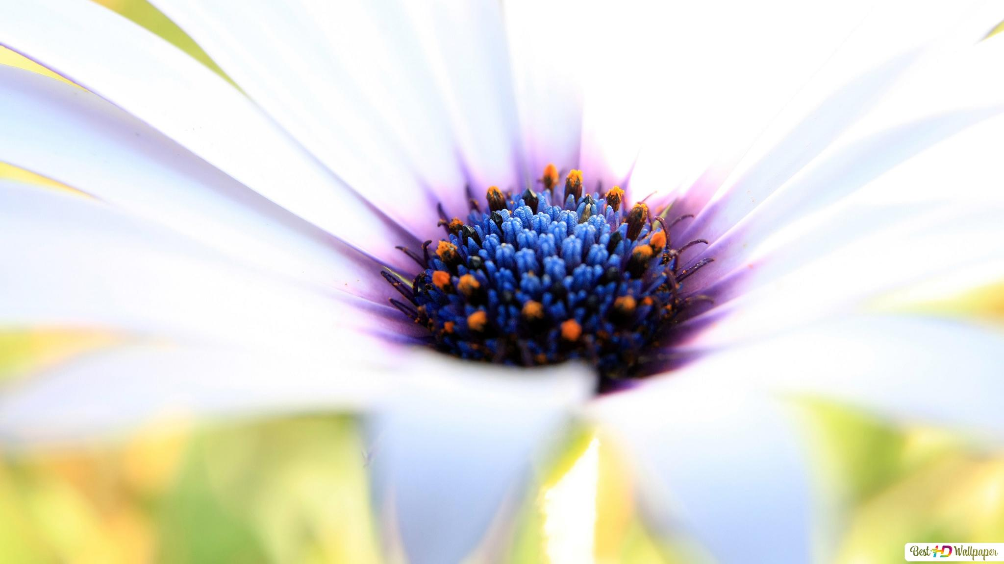 Fleur Blanche De Près Hd Fond Décran Télécharger