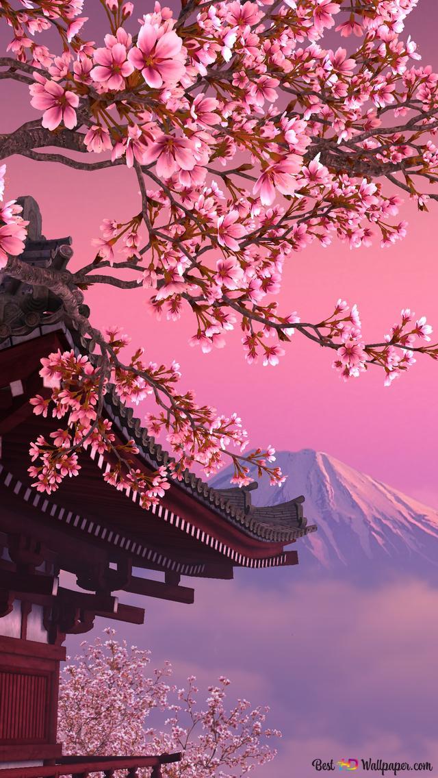 Fleur De Cerisier Hd Fond D Ecran Telecharger